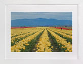 Minted Carpet of Tulips Art Print