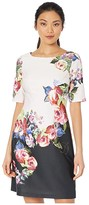 Adrianna Papell Rose Printed A-Line Dress (Black Multi) Women's Dress