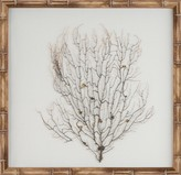 The Well Appointed House Natural Coral Sea Fan Wall Art with a Natural Frame