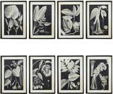 OKA Leaf Photogram Framed Prints, Set of Eight