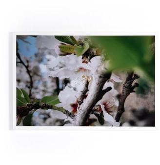 west elm Framed Print - Spring Blossoms