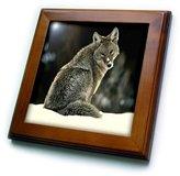 3dRose LLC ft_675_1 Wild animals - Coyote - Framed Tiles