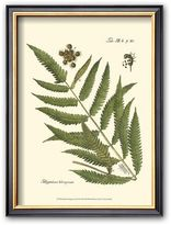 "Art.com Small Antique Fern II"" Framed Art Print"