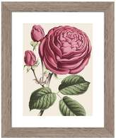 PTM Images Vintage Roses Wall Art