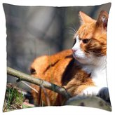 "iRocket - Ginger cat - Throw Pillow Cover (20"" x 20"", 50cm x 50cm)"