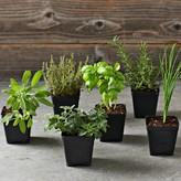 Williams-Sonoma Williams Sonoma Essential Kitchen Garden Herbs 6-Pack
