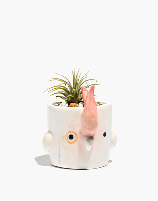 Madewell Scavenge + Bloom Cockatoo Monomal Mini Planter