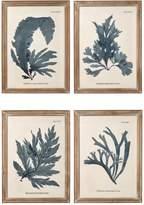 OKA Seaweed Framed Prints, Set of 4