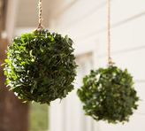 Pottery Barn Live Ivy Kissing Ball