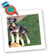 3dRose LLC qs_259_1 Dogs Schnauzer - Schnauzer - Quilt Squares