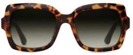 Toms 52MM Mackenzie Tortoise Shell Gradient Sunglasses