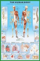 Camilla And Marc 1art1 36800 Poster Le Corps Humain Anatomie 91 X 61 cm