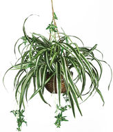Asstd National Brand Nearly Natural Spider Hanging Basket Silk Plant