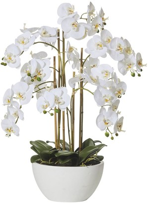 Albi Imports Butterfly Orchid In Round Pot White