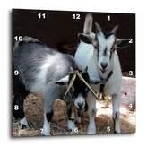 3dRose LLC Pygmy Goat 10 by 10-Inch Wall Clock