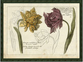 One Kings Lane Tulip and Narcissus, 1750