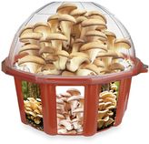 Dome Terrarium Grow Your Own Oyster Mushrooms