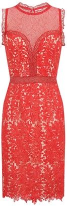 Little Mistress Coral Crochet and Lace Bodycon Dress