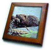 3dRose LLC ft_1021_1 Wild animals - Beaver - Framed Tiles