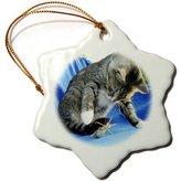 3dRose LLC orn_46870_1 Taiche - Photography - Tabby Cats - Predator - animal, moggie, tabbies, tabby cat, cat, cats, cute - Ornaments