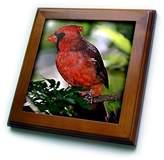 3dRose LLC ft_584_1 Birds - Cardinal Bird - Framed Tiles