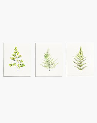 Madewell Fox Hollow Studios Fern Art Print Set