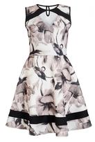 Quiz Cream and Black Floral Skater Dress