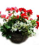 Fashion World Artificial Plant Geranium Wall Basket