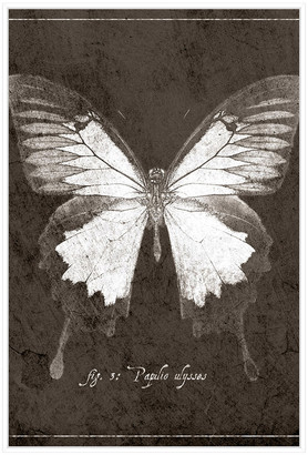 Jonathan Bass Studio Butterfly H, Decorative Framed Hand Embellished Canvas