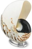 Williams-Sonoma Natural Nautilus Shell on Nickel Base