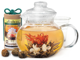 Primula Flowering Teapot Gift Set