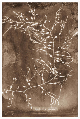 Jonathan Bass Studio Natural Forms Sepia 2, Decorative Framed Hand Embellished Canvas