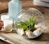 Pottery Barn Live Tabletop Air Plant Garden