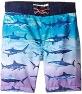Appaman Kids - Blacktip Shark Swim Trunks Boy's Swimwear