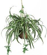 Asstd National Brand Nearly Natural Spider Hanging Basket Silk Plant