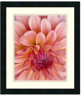 Dahlia ''Graphic II'' Framed Wall Art