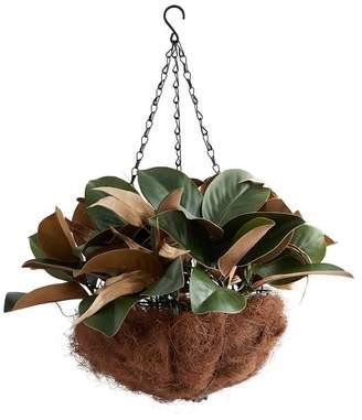 Pottery Barn Gold-Leaf Magnolia Hanging Basket