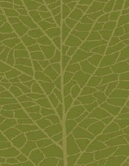 """Lava Green/Natural Indoor/Outdoor Area Rug Rug Size: Rectangle 7'10"""" x 11'2"""""""