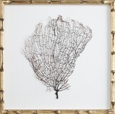 The Well Appointed House Natural Coral Sea Fan Wall Art in a Champagne Bamboo Frame
