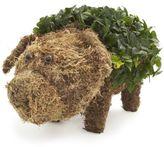 Sur La Table Topiary Pig