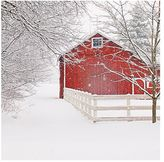 Pottery Barn Red Barn in the Snow Framed Print by Cindy Taylor