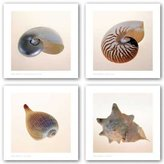 "McGaw Graphics Conch, Fig Shell, Nautilus and Polished Nautilus Set by Tom Artin 16""x16"" Art Print Poster"