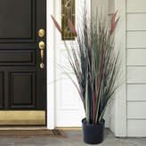 Asstd National Brand 4' Potted Ornamental Cattail Grass