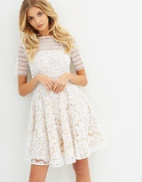 Cooper St Alessandra Lace Fit And Flare Dress