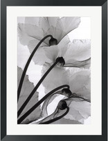 STUDY Evive Designs Cyclamen Photography