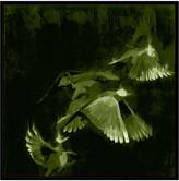 Jonathan Bass Studio Bird Study 1 - Green, Decorative Framed Hand Embellished Canvas