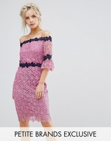 Paper Dolls Petite Bardot Allover Lace Pencil Dress With Contrast Detail