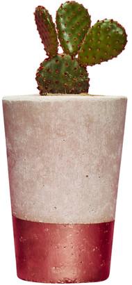 Hi Cacti - Tall Copper Concrete Cactus Pot With Cactus Or Succulent - A - Copper/Grey