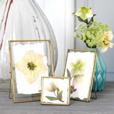 Graham and Green Set of 3 Gold Glass Frames
