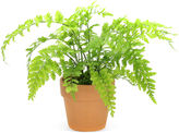 One Kings Lane 10 Mother Fern in Planter, Live